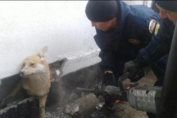 В Астрахани вызволили застрявшего в стене тюрьмы пса. В Астрахани вызволили застрявшего в стене тюрьмы пса