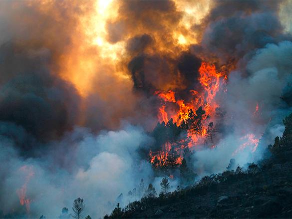 Глобальное потепление грозит России долгими лесными пожарами. 307855.jpeg