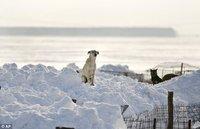 В Европу пришла русская зима. frost