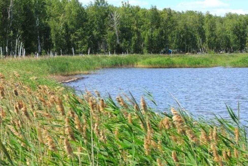 Новосибирск отрекся от передачи озера Сладкое Казахстану. Новосибирск отрекся от передачи озера Сладкое Казахстану