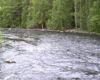 Девочка из Саратова погибла, прыгнув с моста в реку