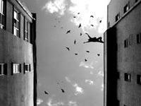 Студент выбросился из окна московского общежития