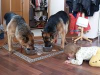 Родители отдали девочку на воспитание собакам и кошкам