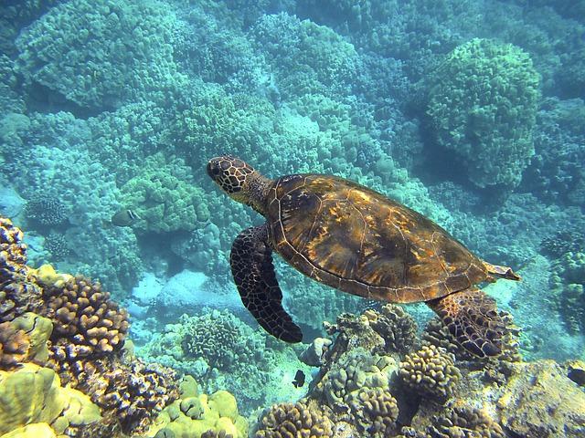 Биологи выяснили, почему морские черепахи едят пластик. 405871.jpeg