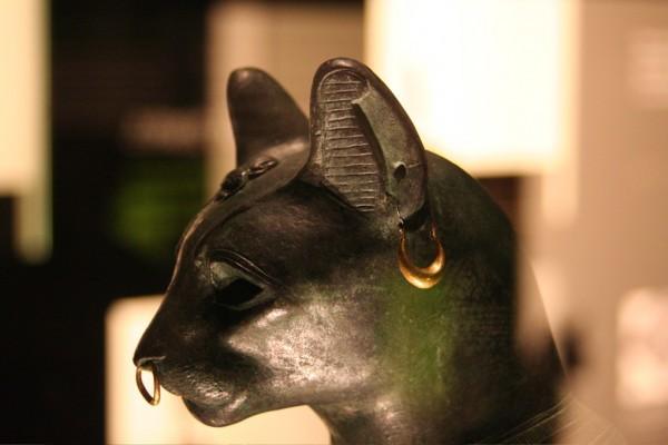 Кошки стали домашними животными намного раньше, чем все думают. 393872.jpeg