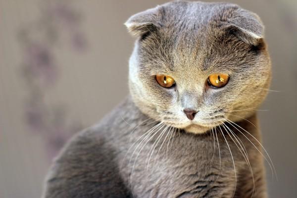 Почему Вам стоит завести дома кошку.. 393873.jpeg