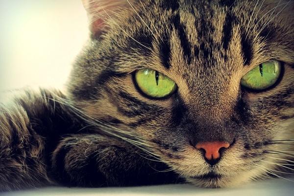 «Кошачья» литература. 393874.jpeg