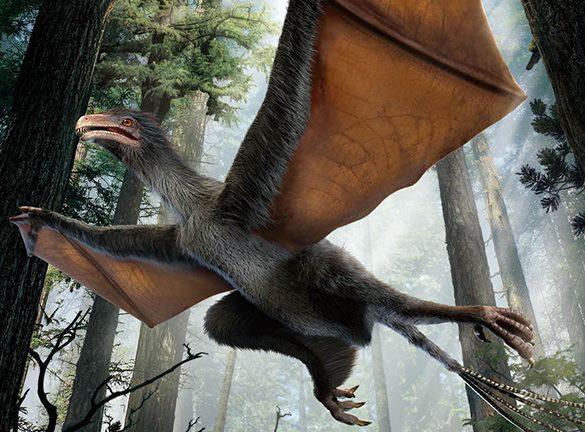 """Ученые ищут ответ на вопрос: умел ли летать """"динозавр-бэтман""""?. Динозавр"""
