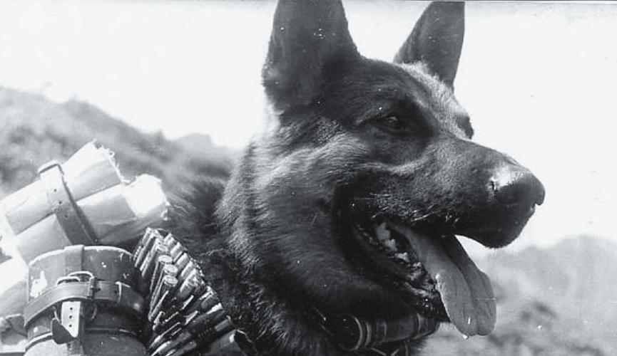 Животные на войне - как братья наши меньшие помогали солдатам. 399880.jpeg
