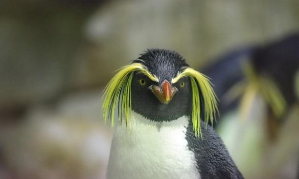 Англичане продают остров с пингвинами в Фолклендском архипелаге. 395881.jpeg