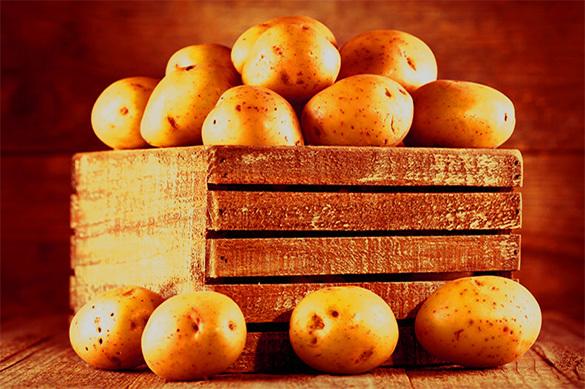 """ГМО-картофель """"золотого """" цвета вывели в США. 378888.jpeg"""