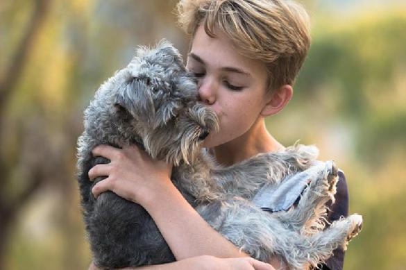 Почему люди любят собак и кошек больше, чем себе подобных. Почему люди любят собак и кошек больше, чем себе подобных