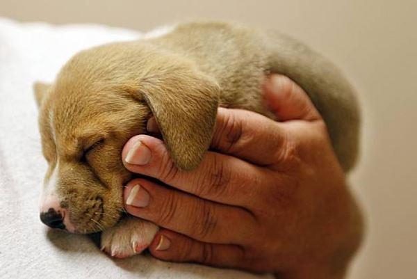 Сегодня весь мир отмечает День защиты животных. 376890.jpeg