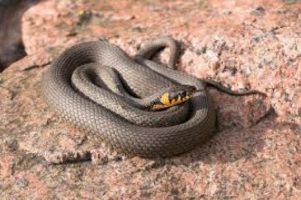 Подбираем змею с подходящим темпераментом. 394894.jpeg