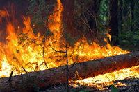 Лесные пожары вновь