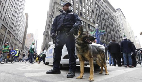 Полицейская овчарка в США съела лицо задерживаемого. ВИДЕО. Полицейский с овчаркой