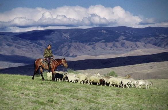 В Туве возрождают вековые традиции. Тува, традиции Тувы, отгонное скотоводство Тувы