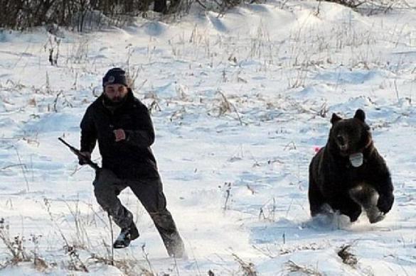 Медведя объявили неадекватным за кражу теленка в неположенном месте. 390897.jpeg