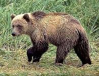 Сегодня медведи просыпаются