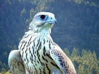 Во Владивостоке пресечена контрабанда редких птиц. 277902.jpeg