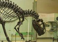Ученые поставили под вопрос версию о гибели динозавров. dinosaur