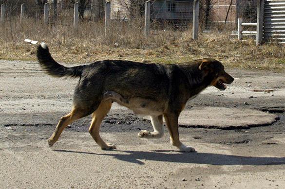Бездомная собака спасла девушку, которую отвезли умирать в лес