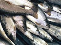 В Москве и Петербурге появится сеть киосков по продаже рыбы