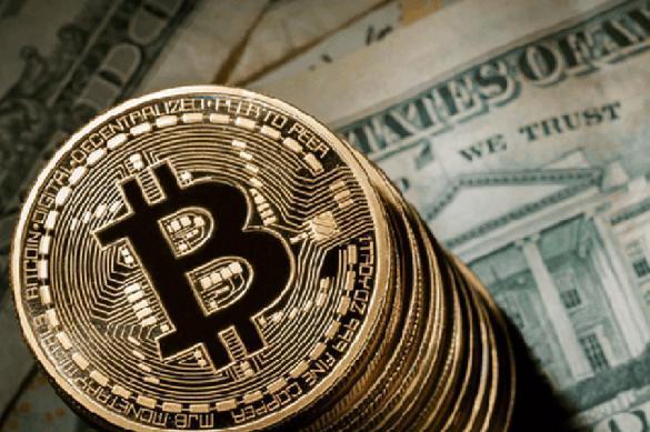 Чайка инвестирует в использование блокчейна. 386909.jpeg