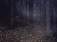 Четырехлетняя девочка пропала в лесу в Свердловской области