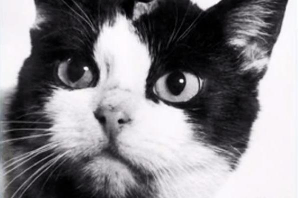 Единственной кошке, покорившей космос, собирают деньги на монумент всети интернет