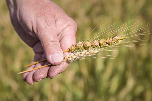 Минсельхоз Украины: Посевная выполнена на 101% благодаря вере в агробизнес, засеяны и заминированные поля -. 321914.jpeg