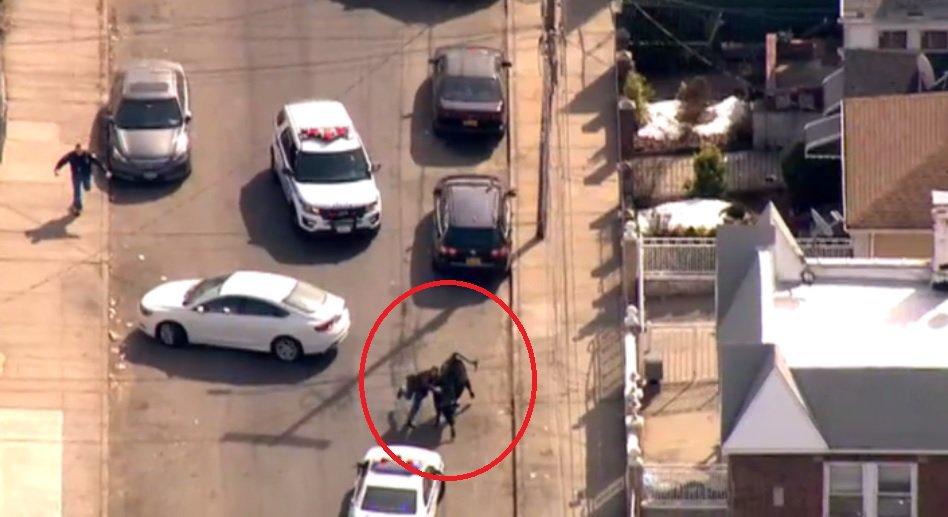 Полиция Нью-Йорка провела спецоперацию по захвату коровы