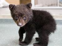 В Южной Каролине на обочине шоссе нашли коробку с медвежатами. 281916.jpeg