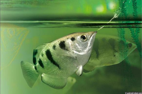 Рыбы способны узнать человека в лицо. 397921.jpeg