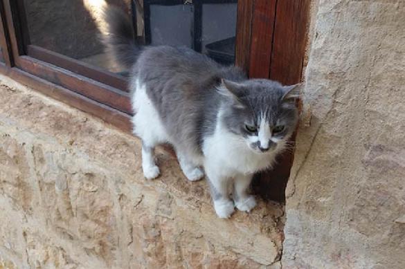 Провинциалка бросила кота в аэропорте ради отпуска. 388922.jpeg