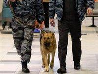 Из-за подозрительной машины эвакуирован Ярославский вокзал. 245925.jpeg