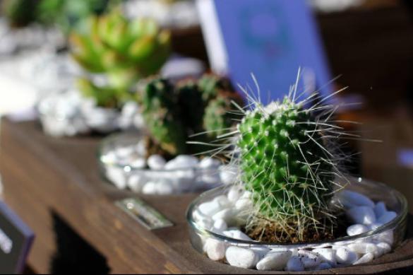 Растения, которые должны быть в каждом доме. 394925.jpeg