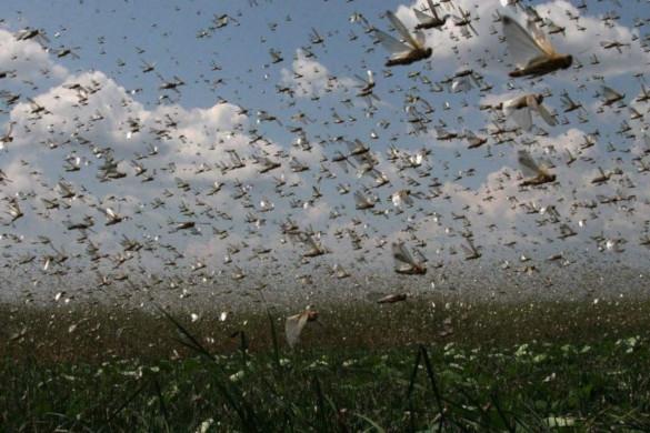 Глобальное потепление сократило количество насекомых. Чем это грозит?. 393927.jpeg