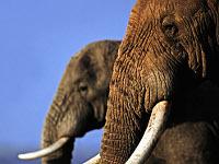 Ученые подсчитали, как быстро мышь станет слоном. 253929.jpeg