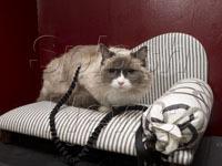 Отель чуть не лишился фирменной кошки-талисмана. cat