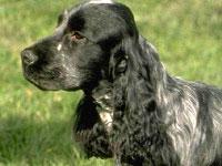 Ученые назвали самую агрессивную породу собак