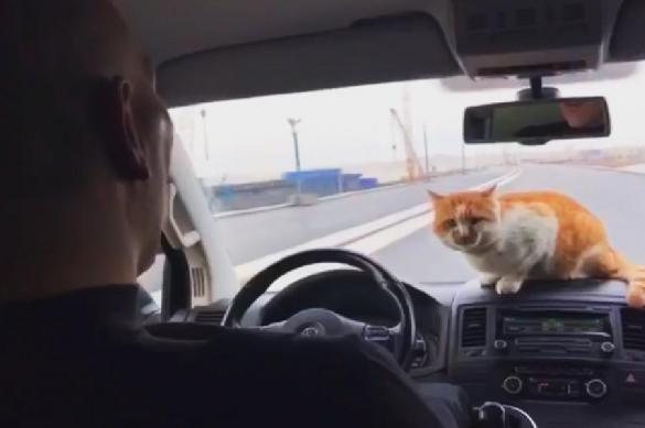 Валуев и кот Мостик открыли движение по Крымскому мосту. 381941.jpeg