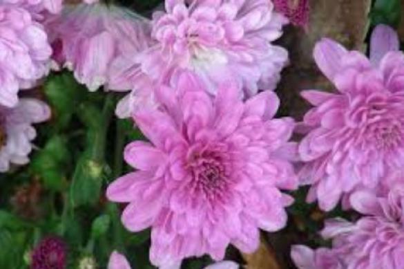 Растения, цветущие зимой. 394941.jpeg
