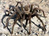 Арахнофобия: почему мы боимся пауков. Арахнофобия: почему мы боимся пауков