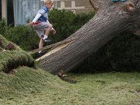 Ураган повалил деревья и обесточил часть Подмосковья. 257943.jpeg