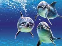 В Туапсе сильный шторм выбросил на берег стаю дельфинов