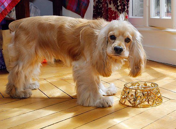 В России вводятся жесткие правила содержания кошек и собак. 317944.jpeg