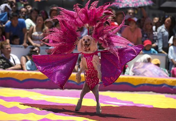 Харьковский Старый цирк могут продать в частные руки за долги, махинации и завышенные зарплаты.