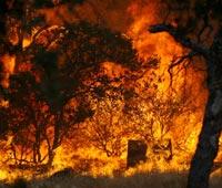 За минувшие сутки по всей стране зафиксировано более 90 лесных