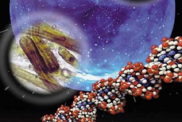 Новые свидетельства того, что жизнь угодила наЗемлю через метеориты